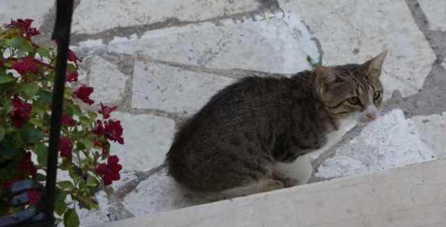 ab2fbac4109 O očkování kočky proti vzteklině si zpravidla musíme u veterináře říci. V České  republice totiž není povinné