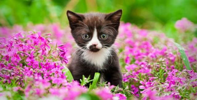Jak vypudit kočky ze zahrady