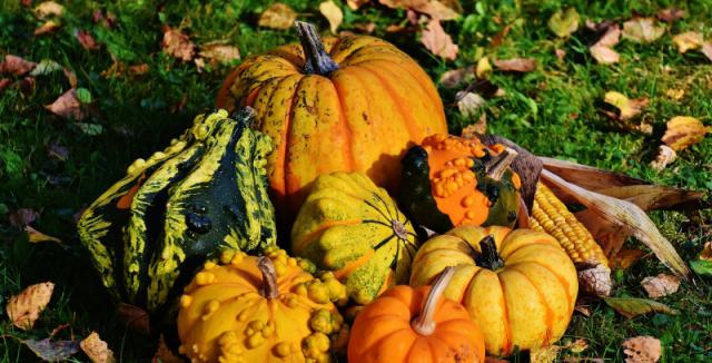 Výsledek obrázku pro podzim