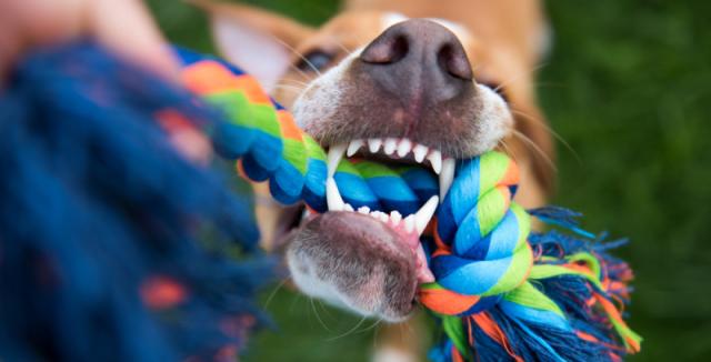 Hračky, které vyrobíte z obyčejné staré deky, bude váš pes milovat • Hobby  / inStory.cz