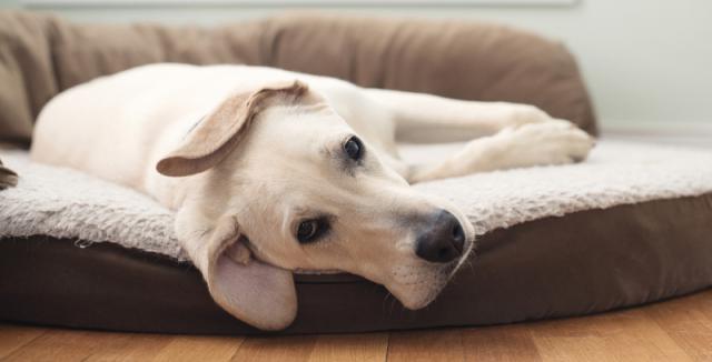 levný podvádění psí styl
