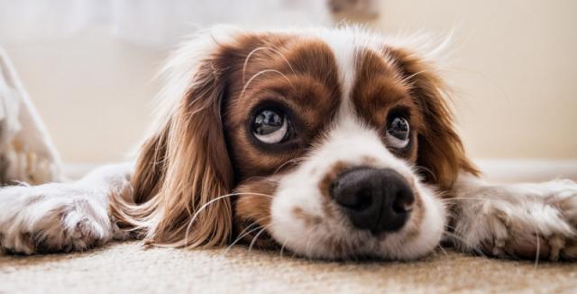 Jak zbavit psa stresu