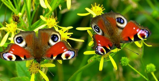 Milujete motýly? Poradíme, jak je přilákat na vaši zahradu • Hobby / inStory.cz