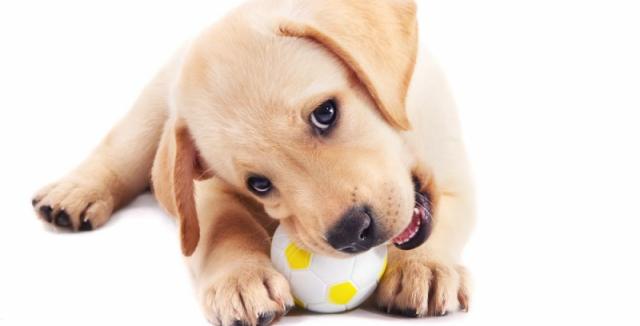 Snad každý pes miluje gumové hračky. Některými se ale může dokonce i  přiotrávit • Hobby / inStory.cz