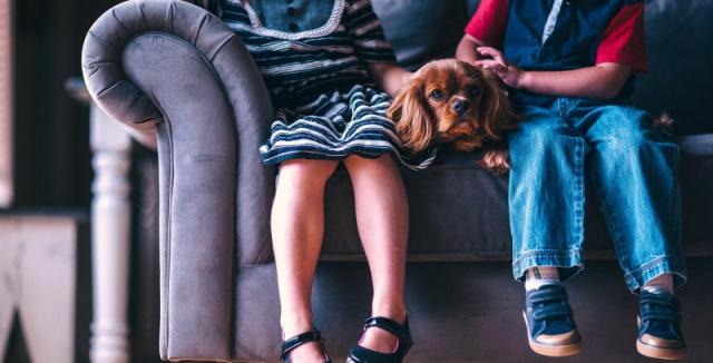 Se psem na návštěvu aneb jak to zvládnout v klidu • Hobby / inStory.cz